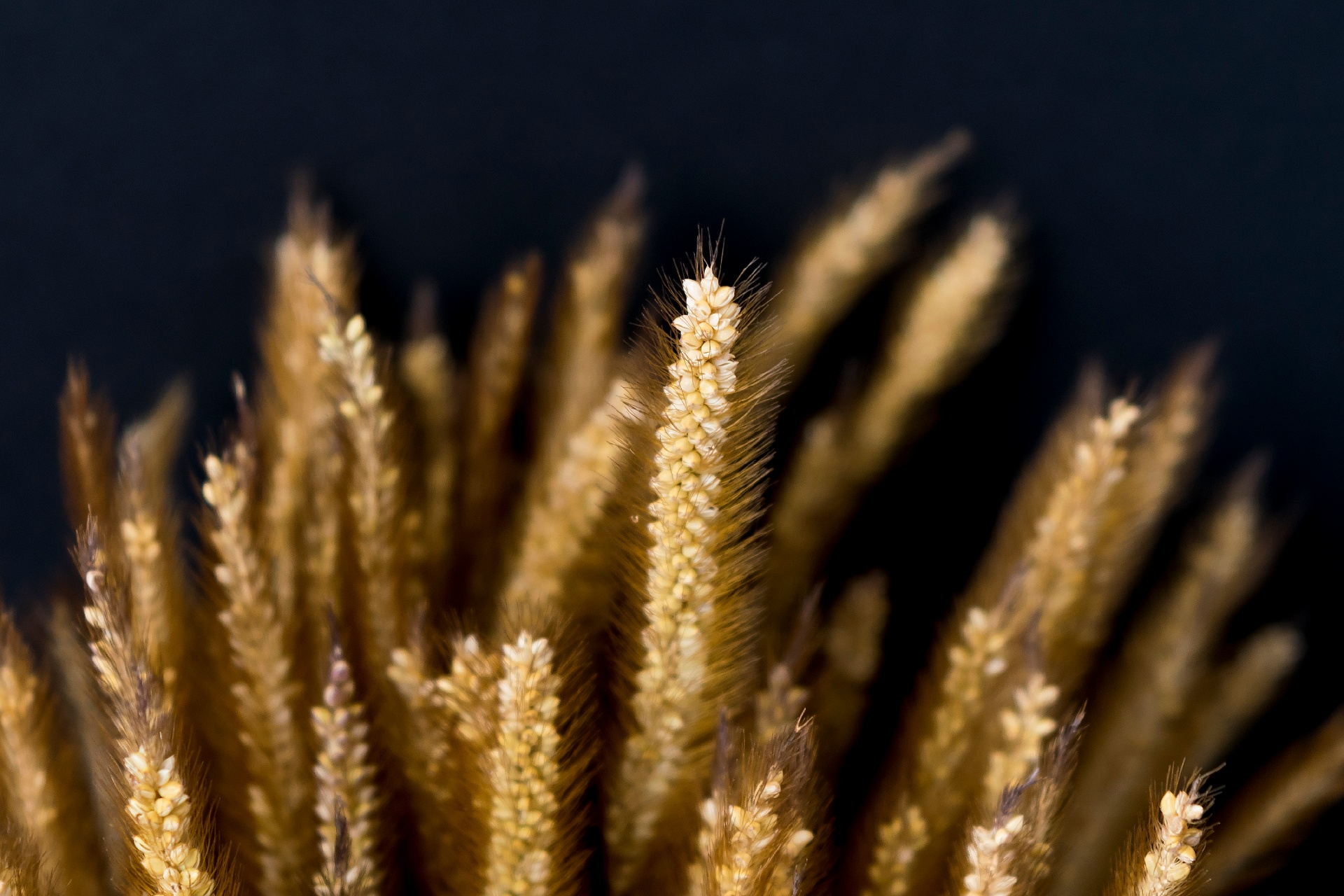 Images of wheat for beermaking